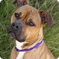 Adopt A Pet :: Rhonda Rowsy**ADPTN FEE WAVD** - Berkeley, CA