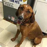 Adopt A Pet :: Ace - Libby, MT