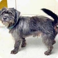 Adopt A Pet :: Ricky - Halifax, NC
