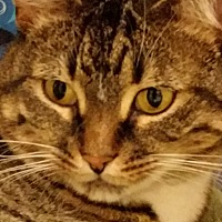 Adopt A Pet :: Flossy - Worcester, MA