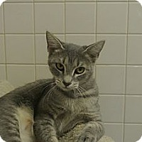 Adopt A Pet :: Zoe - white settlment, TX