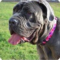 Adopt A Pet :: Liberty - Phoenix, AZ