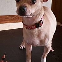Adopt A Pet :: Cody - Inman, SC