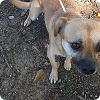 Adopt A Pet :: Buttercup - Lawrenceville, GA