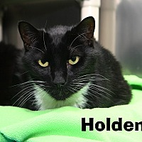 Adopt A Pet :: Holden - Oakland, NJ