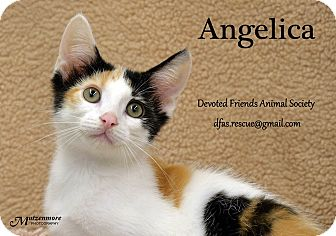 Calico Kitten for adoption in Ortonville, Michigan - Angelica