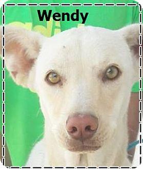 Labrador Retriever Mix Puppy for adoption in El Cajon, California - Wendy-pending adoption