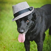 Adopt A Pet :: Franklin - Lake Jackson, TX