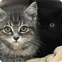 Adopt A Pet :: Tink,  Violet, Piper - Duncan, BC