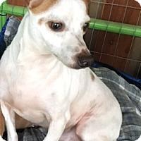 Adopt A Pet :: Max - Creston, CA