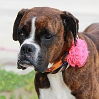 Adopt A Pet :: Riley (with Stuart Little) - Fremont, CA