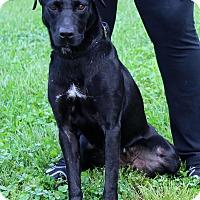 Adopt A Pet :: Priscilla - Waldorf, MD