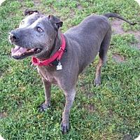 Adopt A Pet :: Hershey- Sac SPCA - Beverly Hills, CA