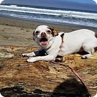 Adopt A Pet :: Lily - San Francisco, CA