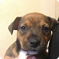 Adopt A Pet :: Rubble - Wichita Falls, TX