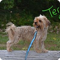 Adopt A Pet :: Terry - Lebanon, MO