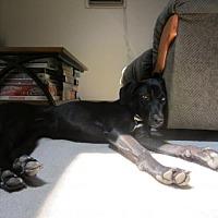 Adopt A Pet :: Hazel - Aurora, CO