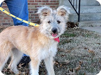 Terrier (Unknown Type, Medium) Mix Puppy for adoption in Salem, New Hampshire - TIPPY
