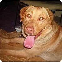 Adopt A Pet :: Bond - North Jackson, OH