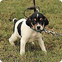 Adopt A Pet :: Gillian - Staunton, VA