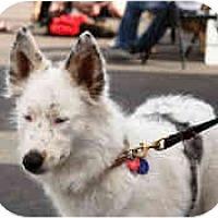 Adopt A Pet :: Jasmine - Mesa, AZ
