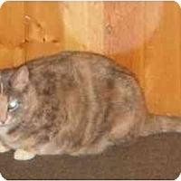 Adopt A Pet :: Penelope - Montreal, QC