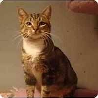 Adopt A Pet :: Bongo - Muncie, IN
