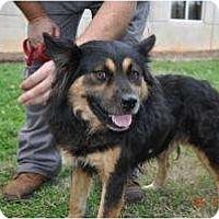 Adopt A Pet :: Gentle Duke - Baltimore, MD