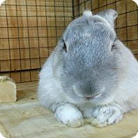 Adopt A Pet :: Fabian - Williston, FL