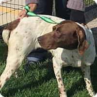 Adopt A Pet :: Della - Streetsboro, OH