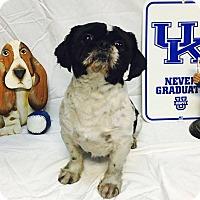 Adopt A Pet :: Elvis - Hazard, KY