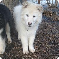 Adopt A Pet :: Kramer - Egremont, AB