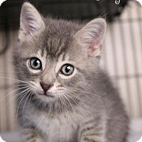 Adopt A Pet :: Jerry - Benton, LA