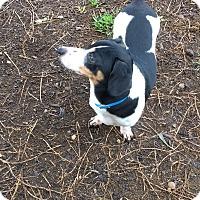 Adopt A Pet :: Sela - Lavon, TX