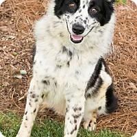 Adopt A Pet :: Ashes - Alpharetta, GA