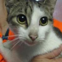 Adopt A Pet :: Nala - Robinson, IL