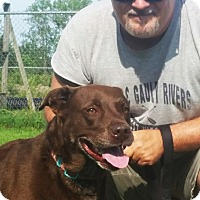 Adopt A Pet :: Hailey - Elyria, OH