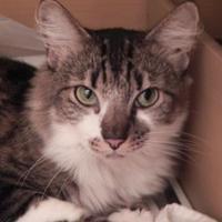 Adopt A Pet :: Josie - Mesa, AZ