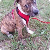 Adopt A Pet :: Pete - Pequot Lakes, MN
