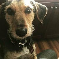 Adopt A Pet :: Kai - Garden City, MI