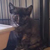 Adopt A Pet :: KAYLA - Clinton, NC