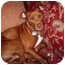 Photo 2 - American Staffordshire Terrier Dog for adoption in Tyler, Texas - TG-Rosie