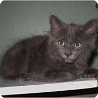 Adopt A Pet :: Rohld - Shelton, WA