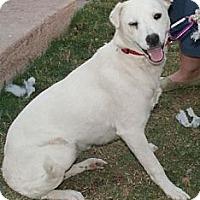Adopt A Pet :: Chalupa - Phoenix, AZ