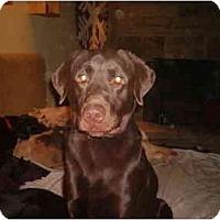 Adopt A Pet :: Walnut - North Jackson, OH