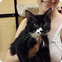 Adopt A Pet :: Shiloh - Mesa, AZ