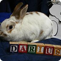 Adopt A Pet :: Darius - Newport, DE