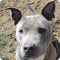 Adopt A Pet :: Kanga - Sacramento, CA