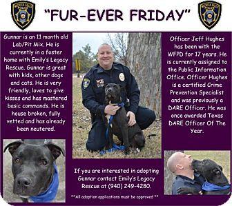 Pit Bull Terrier Mix Dog for adoption in Wichita Falls, Texas - Gunnar