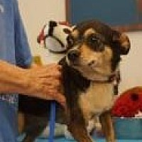Adopt A Pet :: Ziva - Evans, GA